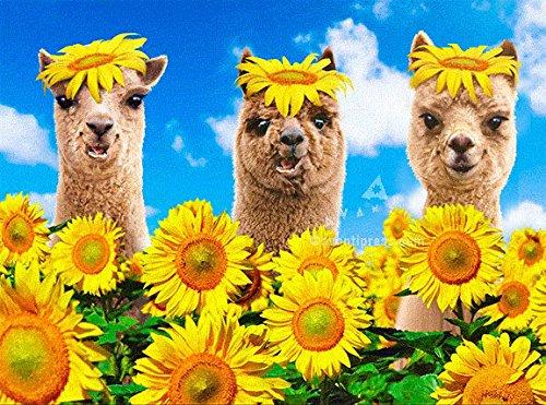 - Avanti Llamas And Alpaca In Sunflowers Lenticular Motion Funny Birthday Card