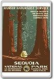 1938, Sequoia National Park, USA - Vintage Travel Fridge Magnet