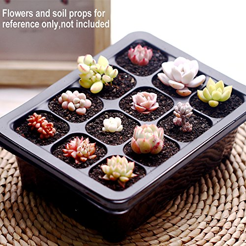 ARMRA 10 Set Seed Trays Garden Plant Seedling Starter Germination with Drain Holes Efficiently Transfers Heat Promotes Root Growth with Labels Hand Tool Kit (10 Trays, 12-Cells Per Tray) Ideas
