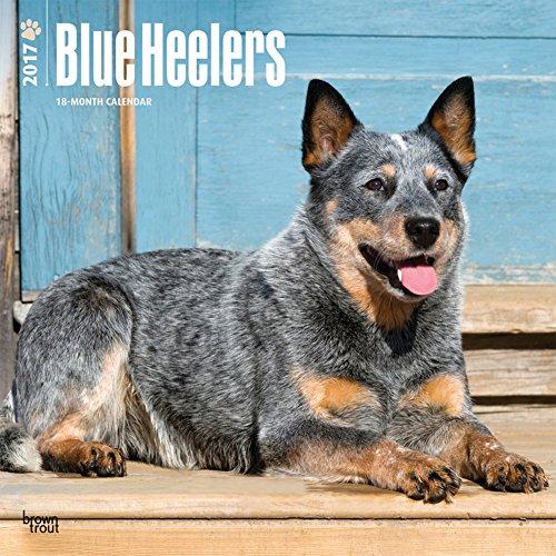Blue Heelers - 2017 Calendar 12 x 12in