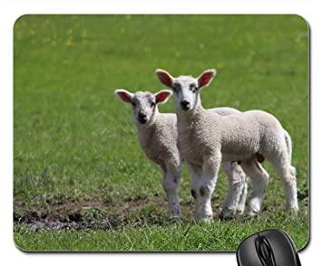 amazon com mouse pads sheep lambs animal field office products