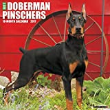 Just Dobermans 2017 Wall Calendar (Dog Breed Calendars)