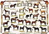 Horses Poster (#45) [Toy] Poster Print, 39x27 Poster Print, 39x27 Poster Print, 39x27