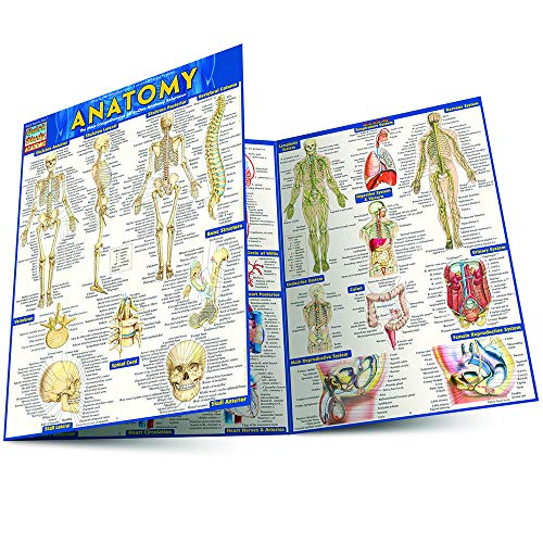 Top 10 recommendation anatomy terminology quick study 2020
