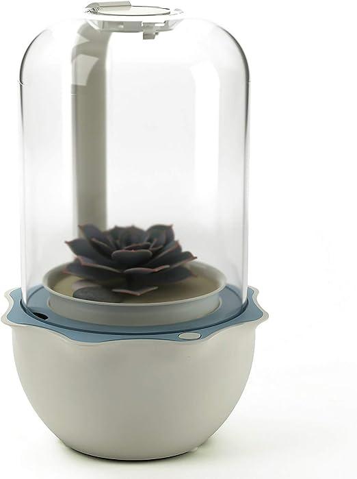 FreePlants Maceta suculenta inteligente con luz LED