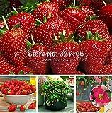 Higarden Raras Semillas de Fresa Fragante Dulce y Jugosa NON-GMO Fresa Monte Everest Frutas Verduras de La Herencia Semillas 4 00 Toscana