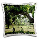 Florene - Country Living - Print of Country Yard With Tire Swing Alva Florida - 16x16 inch Pillow Case (pc_204022_1)