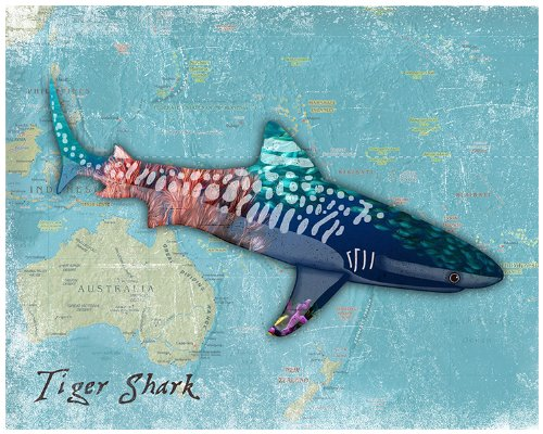 Shark Art Prints for Kids Tiger Shark