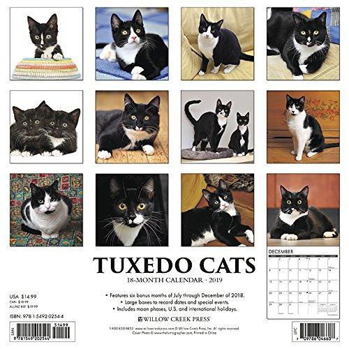 Just Tuxedo Cats 2019 Wall Calendar
