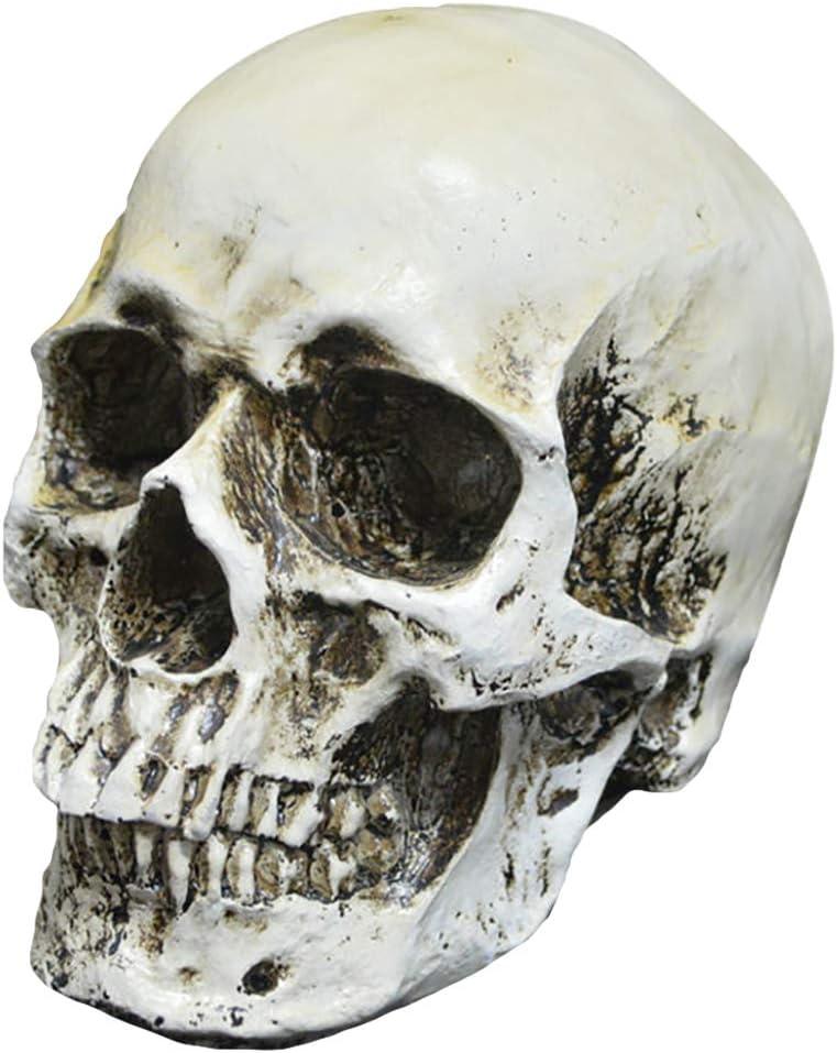 Joyibay Ornamento Realista AnatóMico Humano De La Tabla del Modelo del Hueso De La Resina para Halloween