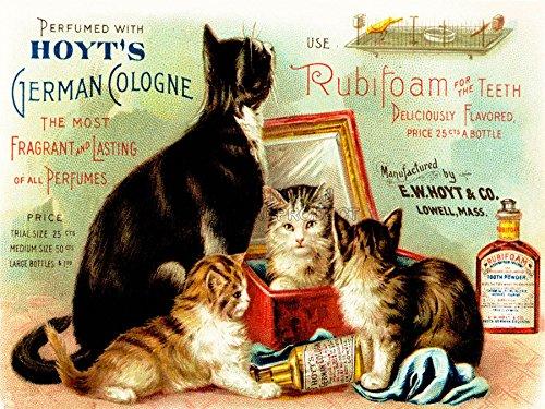 Vintage Health Dental Dental Poster Cats Art Print