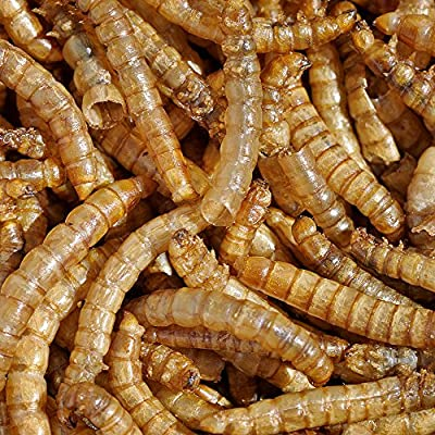 MBTP Bulk Dried Mealworms - Treats for Chickens & Wild Birds
