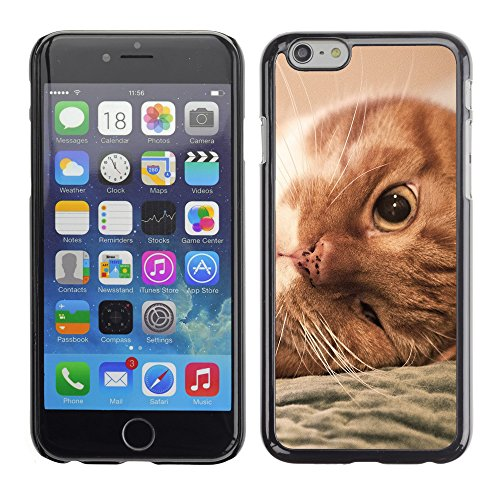 Premio Sottile Slim Cassa Custodia Case Cover Shell // V00003350 gingembre chat paresseux // Apple iPhone 6 6S 6G PLUS 5.5""