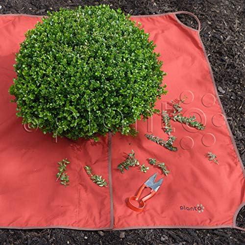 GRATIS HANDSCHUHE NEU Buchsbaum Formschnitt Tuch Formschnitttuch 145 x 145cm