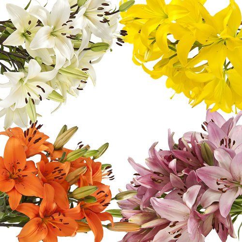 Wholesale Asiatic Lilies (70 Assorted) by eFlowy