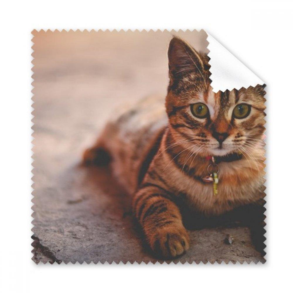 動物静かCat Photograph Glasses布クリーニングクロス電話画面クリーナー5点ギフト   B0761TKQ7X
