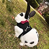 Layboo Soft Mash Rabbits Harness With Leash Reflective for Dogs Cats Bunny Freedom Walking (S, BLACK)