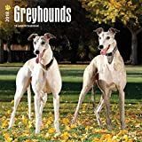 Greyhounds 2018 12 x 12 Inch Monthly Square Wall Calendar, Animals Dog Breeds (Multilingual Edition)