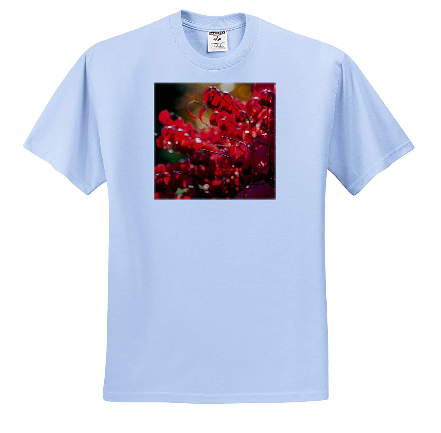 Autumn in The Garden 3dRose Alexis Photography Sunlit red Leaves of a Decorative Shrub T-Shirts Seasons Autumn Leaves