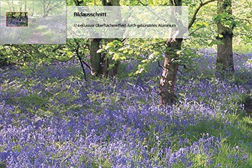 Wallario Premium Glas//Acrylglas Blaues Hasenglöckchen Wald Weg grün 50 x 125 cm