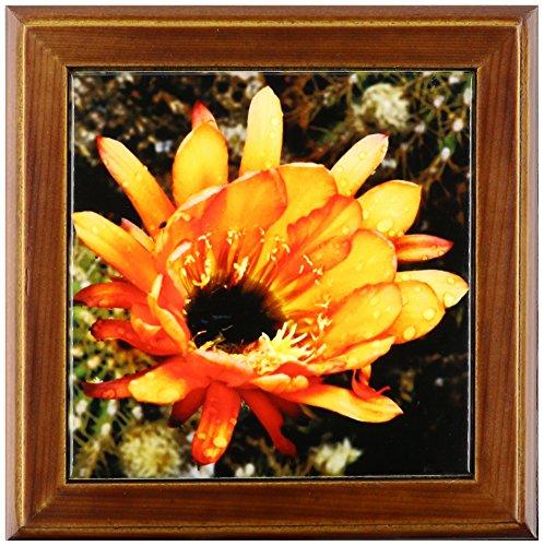 3dRose ft_32390_1 Decorative Colorful Garden Botanic Classic Plant SW Southwest Desert Cactus Red Orange Rain Flower-Framed Tile, 8 By 8-Inch