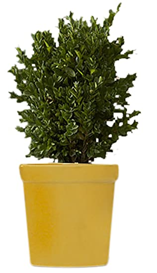 Amazon.com: BIG SALE - Ceramic Flower Pot - Planter for Indoor and ...