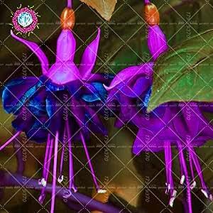 fucsia bonsai 100pcs / bag colgante de semillas de flores, cangrejo seeds.potted de plantas de interior semillas de loto linterna Begonia para el jardín de 3