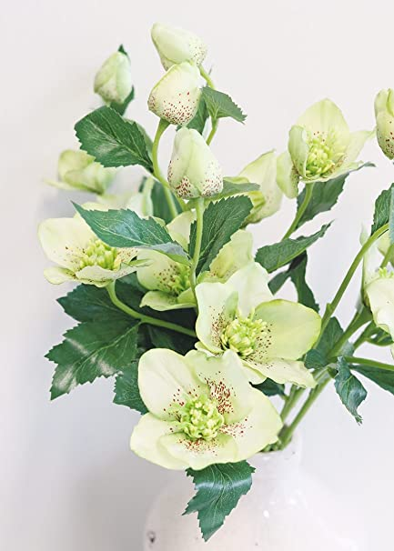 Amazon allstate floral craft helleborus artificial flowers in allstate floral craft helleborus artificial flowers in light green 22quot mightylinksfo