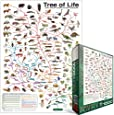 Eurographics Evolution The Tree of Life 1000-Piece Puzzle