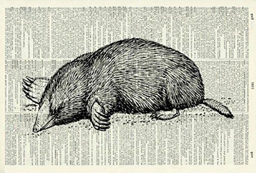 mole-art-print-gift-animal-art-print-victorian-art-print-wildlife-vintage-art-illustration-picture-v