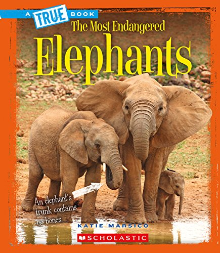 Elephants (A True Book: The Most Endangered)