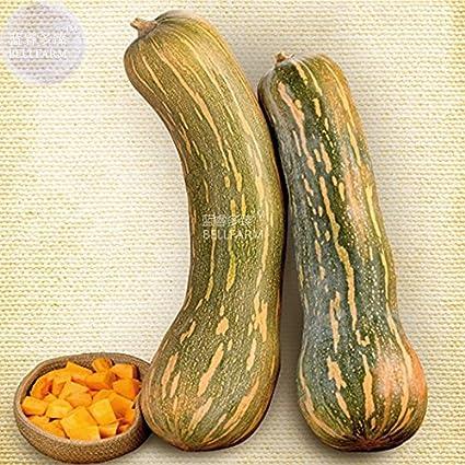 Pinkdose® 2018 Venta caliente Davitu calabaza dulce Mallorca semillas, 10 semillas, verduras espaÃ