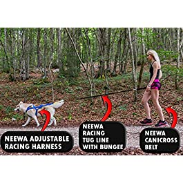Canicross & Skijoring Belt to Run or Walk with your Dog