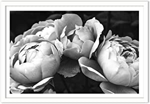 Humble Chic Framed Wall Decor - Fine Art Plants Picture Poster Prints in White Frame for Home Decorations Living Dining Room Bedroom Bathroom Office - Black & White Peonies BW, 24x36 Horizontal