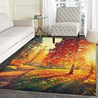 Fall Area Rug Carpet Vibrant Misty Day in Forest Sun Rays Trees Foliage Fallen Leaves Calm View Living Dining Room Bedroom Hallway Office Carpet 5x6 Orange Yellow Green