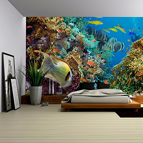 wall26 - Tropical Anthias fish with net fire corals on Red Sea reef underwater - Removable Wall Mural | Self-adhesive Large Wallpaper - 66x96 inches (Wall Underwater Murals)