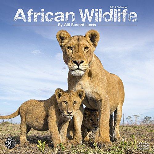 Tiger 2018 Calendar - Wildlife Calendar - Tiger Calendar - Lion Calendar - Elephant Calendar - Monkey Calendar - Calendars 2018 - 2019 Wall Calendars - Animal Calendar - African Wildlife 16 Month Wall Calendar by Avonside