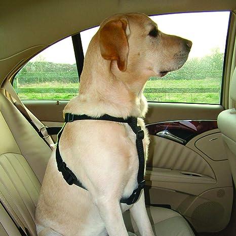 Kumfi Canine Kumfi - Arnés de Seguridad (Talla L): Amazon.es ...