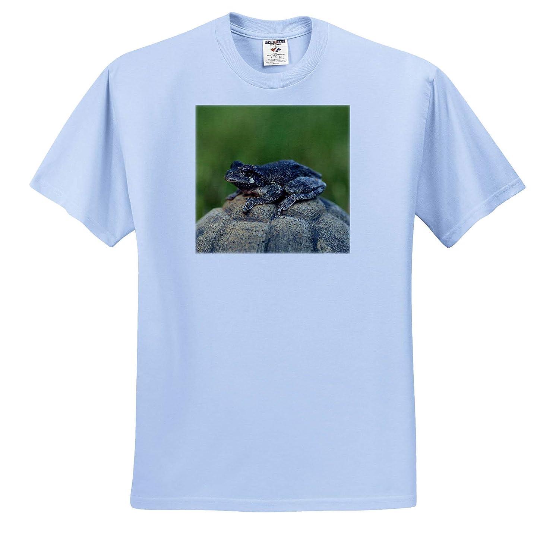 3dRose Stamp City A Macro Photograph of a Copes Gray Tree Frog ts/_315553 Amphibian - Adult T-Shirt XL