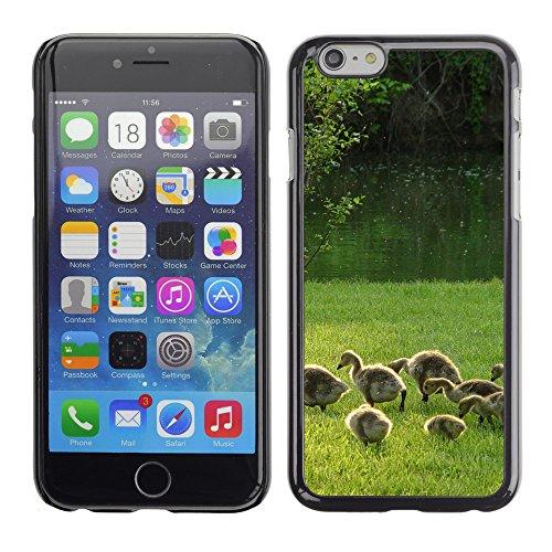 "Premio Sottile Slim Cassa Custodia Case Cover Shell // V00003337 oies et oisons // Apple iPhone 6 6S 6G PLUS 5.5"""