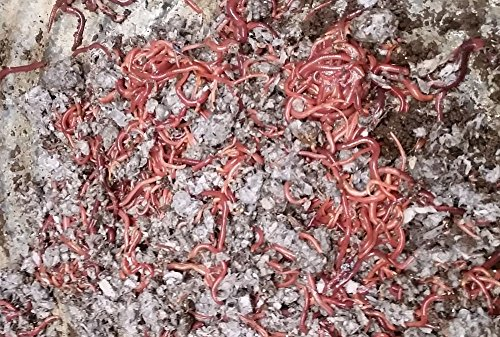 1000 worms - 6