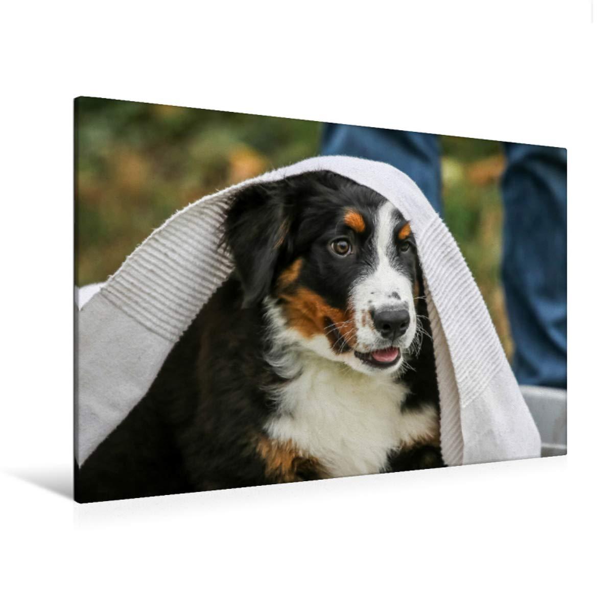 120 x 80 Premium Textile Canvas 90 x 60 cm Horizontal Bernese Mountain Dog