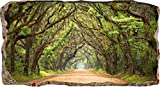 Mural Wall Art Startonight 3D Photo Decor Window Green Tunnel Tree-Wall Paper That Glows In The Dark- Large 32.28î By 59.06î-Wall Mural Wallpaper for Living Room or Bedroom Nature Collection Wall Art
