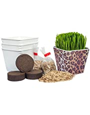Priscilla's Pet Kitty Cat Grass Leopard Combo (3 Pack Kit) Planter Container