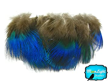 moonlight feather peacock feathers iridescent blue