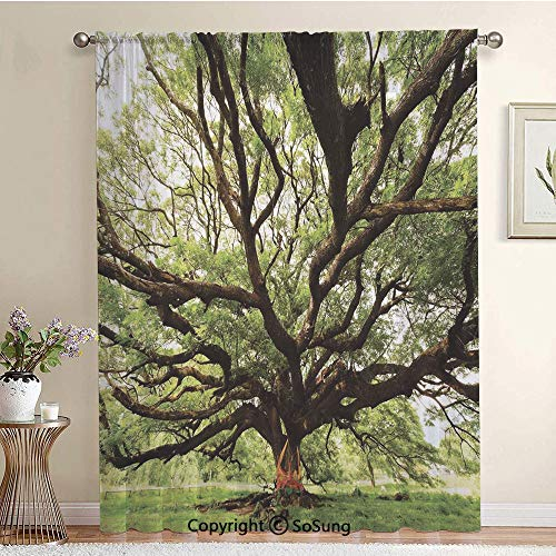 The Largest Monkey Pod Tree in Thailand Eastern Green Big Branches Growth Eco Photo Extra Wide Sheer Window Curtain Panel for Large Window,Sliding Glass Door,Patio Door,1 panel,102 x 84 Inch,Green Bro]()