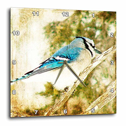 3dRose DPP_12372_2 Blue Jay Grunge by Angelandspot Wall Clock, 13 by 13