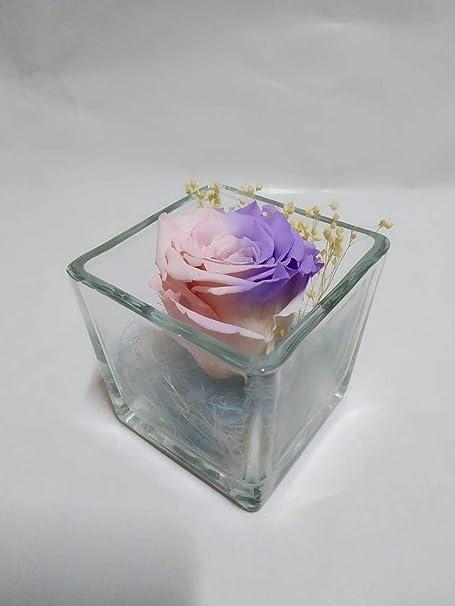 Rosa eterna Arco Iris Bicolor Pastel. Gratis TU ENVÍO. Rosas eterna Arco Iris Pastel. Rosa preservada Bicolor Pastel. Hecho en España.: Amazon.es: Hogar