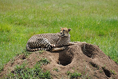 Home Comforts Canvas Print Park Safaris Travel Tanzania Game National Stretched Canvas 10 x ()