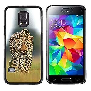 Caucho caso de Shell duro de la cubierta de accesorios de protección BY RAYDREAMMM - Samsung Galaxy S5 Mini, SM-G800, NOT S5 REGULAR! - Big Cat Ferocious Nature
